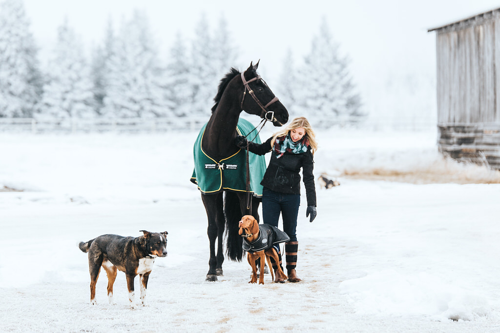 Calgary Equine Session Sue Moodie Photography