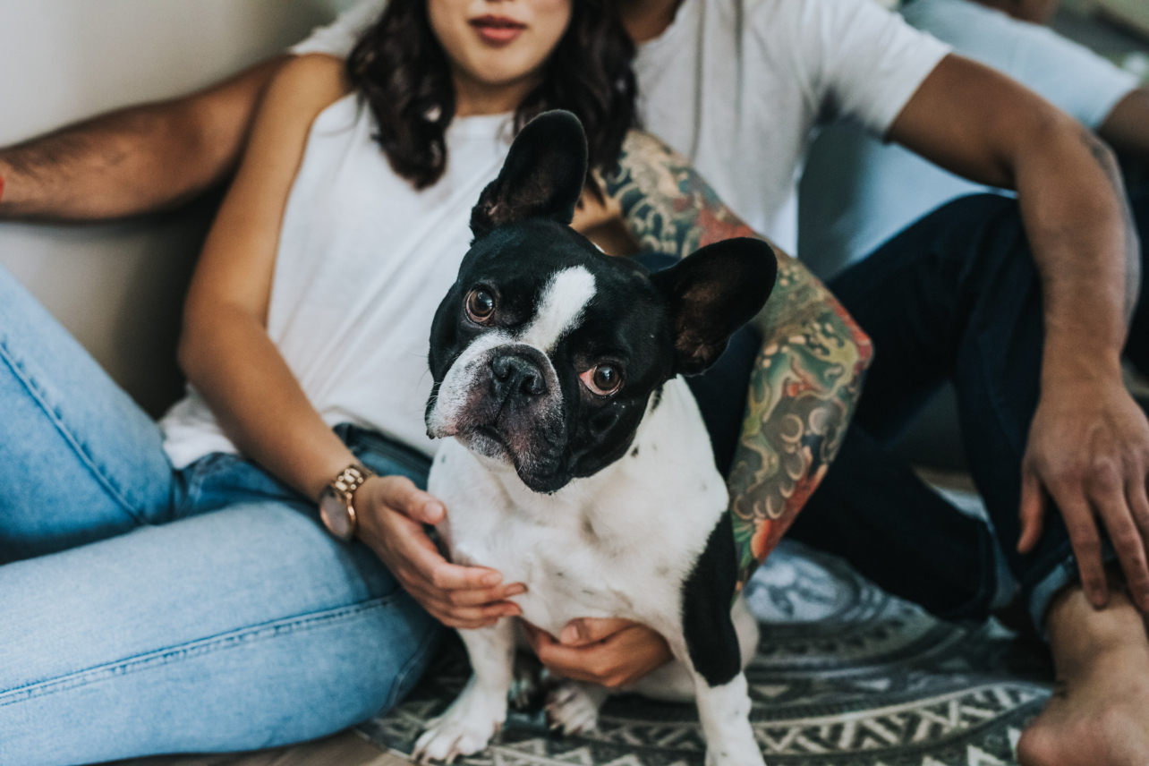 French Bulldog embraced by couple sitting on floor