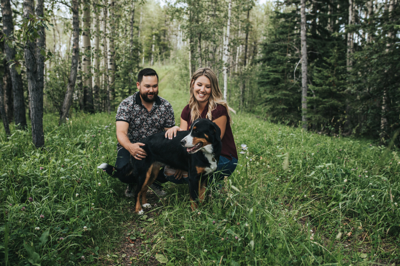 Engagement Photos of couple with Greater Swiss Mountain Dog in Sundre, Alberta